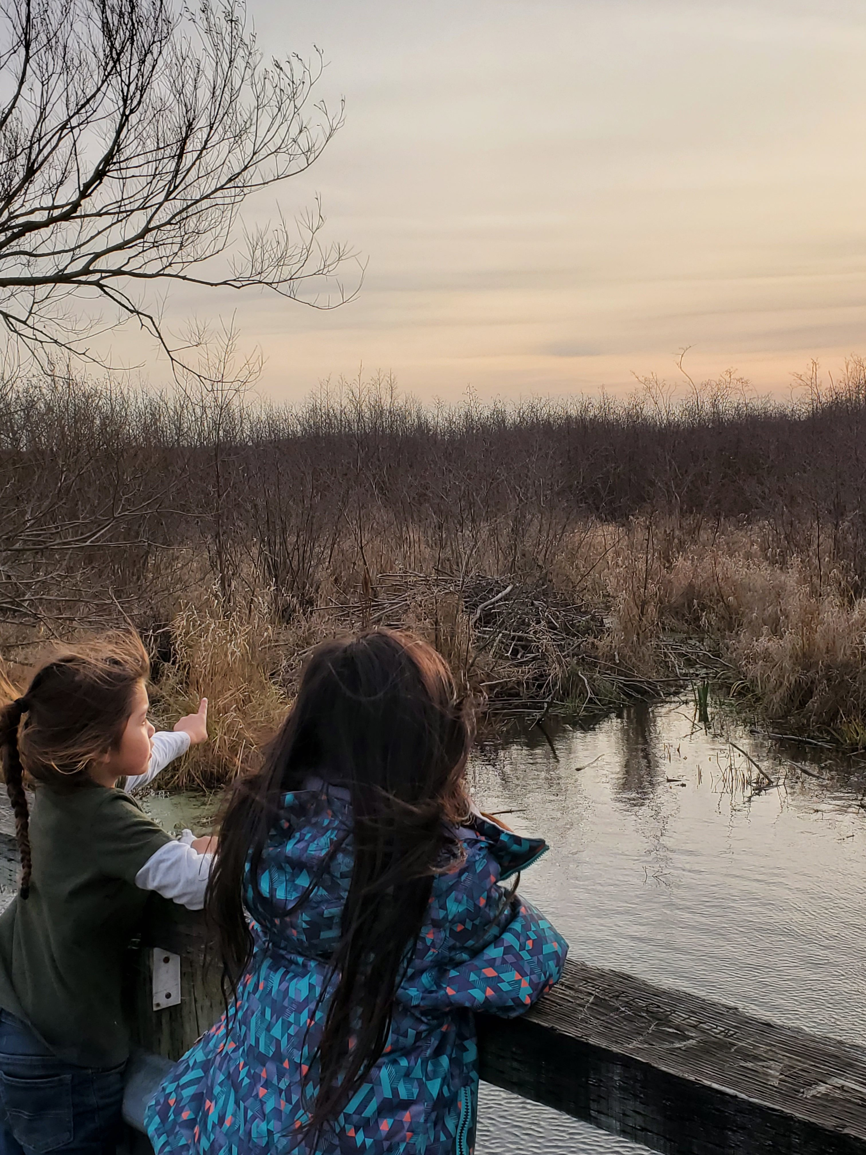 Jaclyn Hall's children Tehaharotaros, 5, and Thahakahteh, 6, overlook a beaver dam along the Pike Creek near the Kanien'kehá:ka land back language camp. (Submitted by Jaclyn Hall)