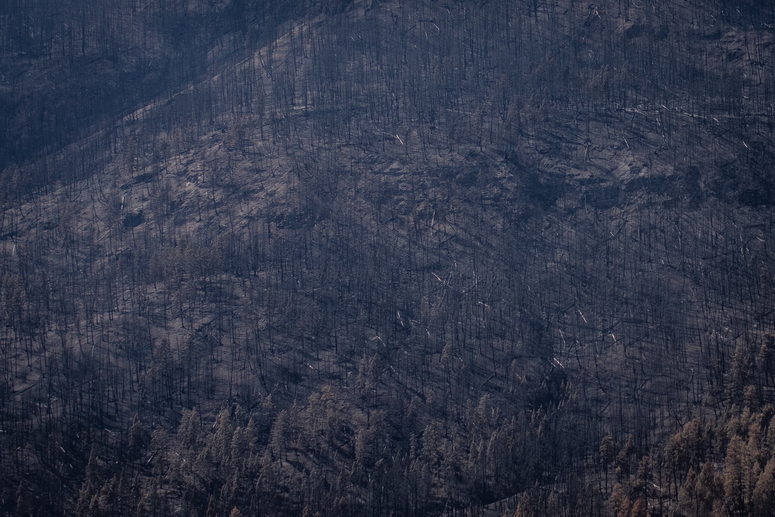 A burnt hillside near Monte Lake, B.C., on Sept. 1. (Maggie MacPherson/CBC)