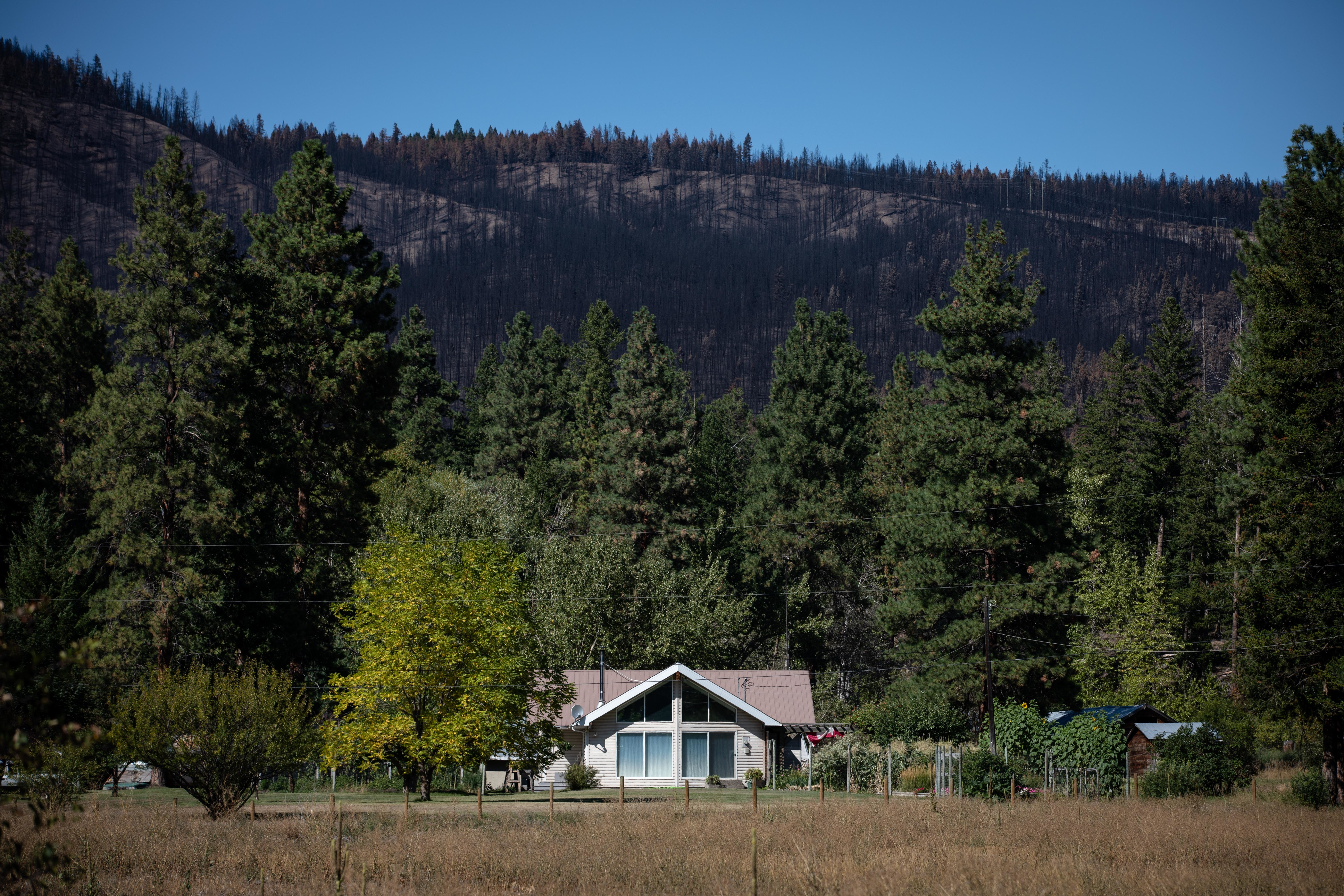 A house sits in front of a hill burned by the White Rock Lake wildfire near Falkland, B.C., on Sept. 2. (Maggie MacPherson/CBC)