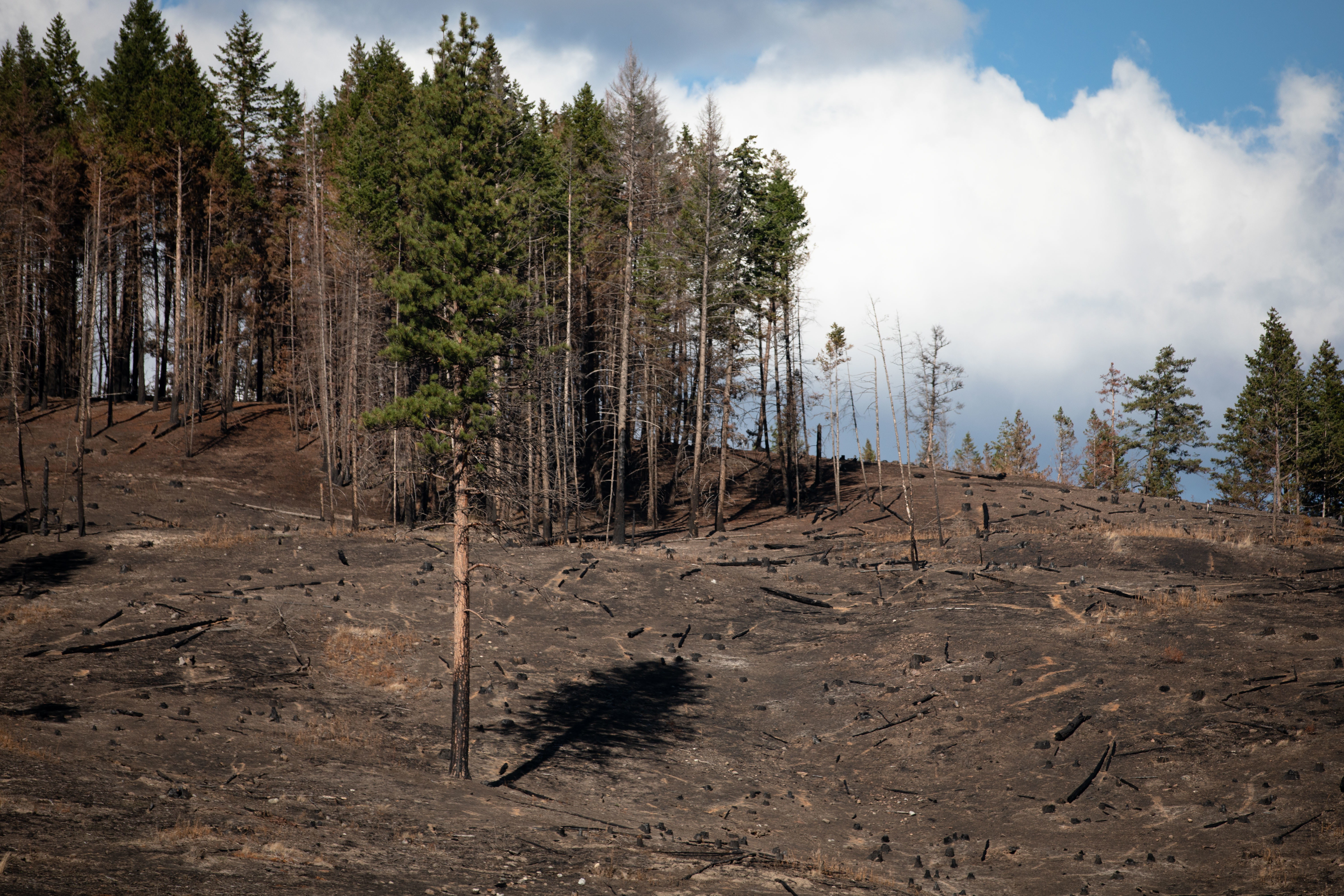 The shadow of a tree falls onto an empty forest floor on Sept. 2, nearly one month after the White Rock Lake wildfire passed through Monte Lake, B.C. (Maggie MacPherson/CBC)