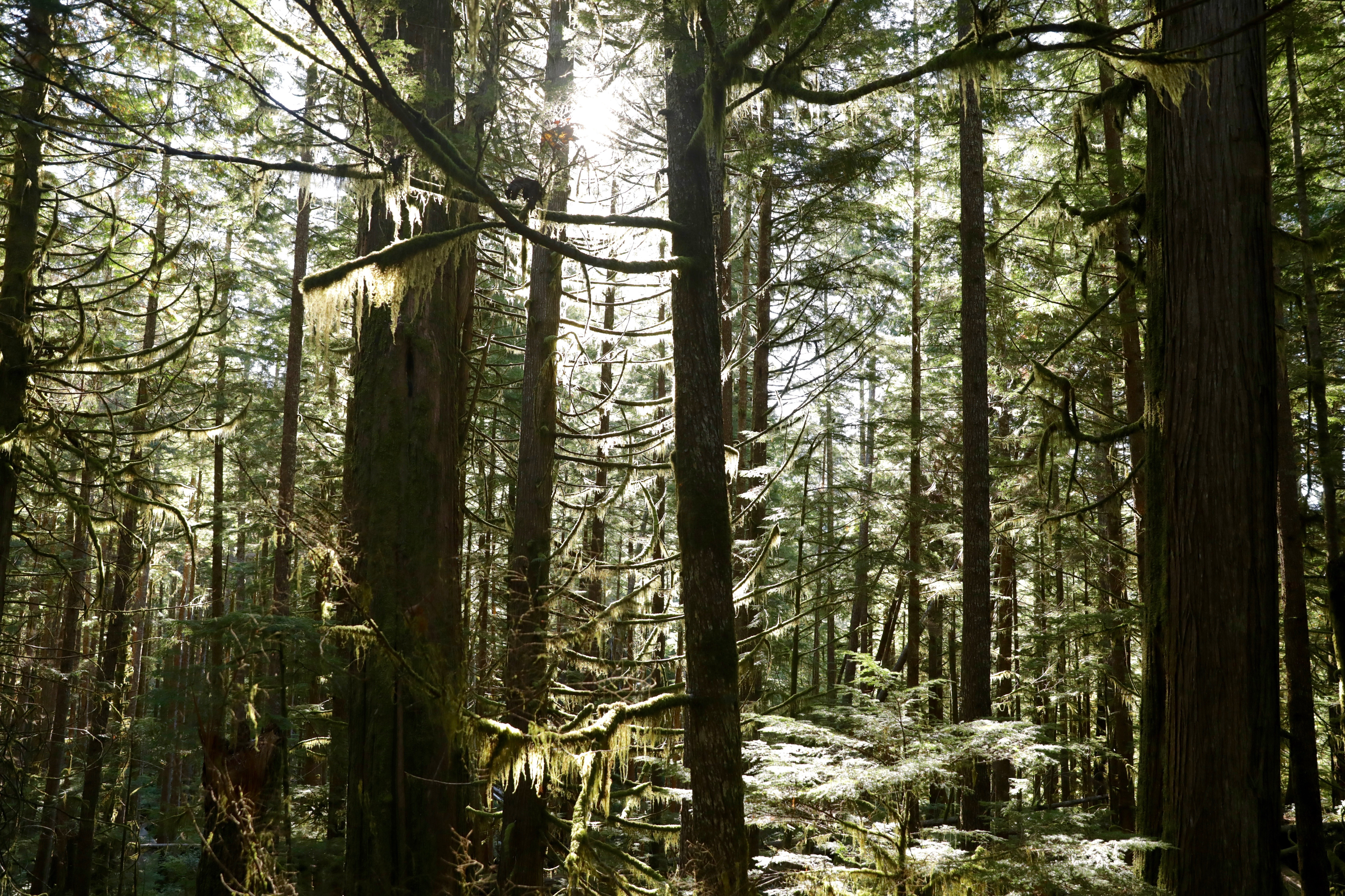 Light shines through the dense forest of Avatar Grove. (Chris Corday/CBC)