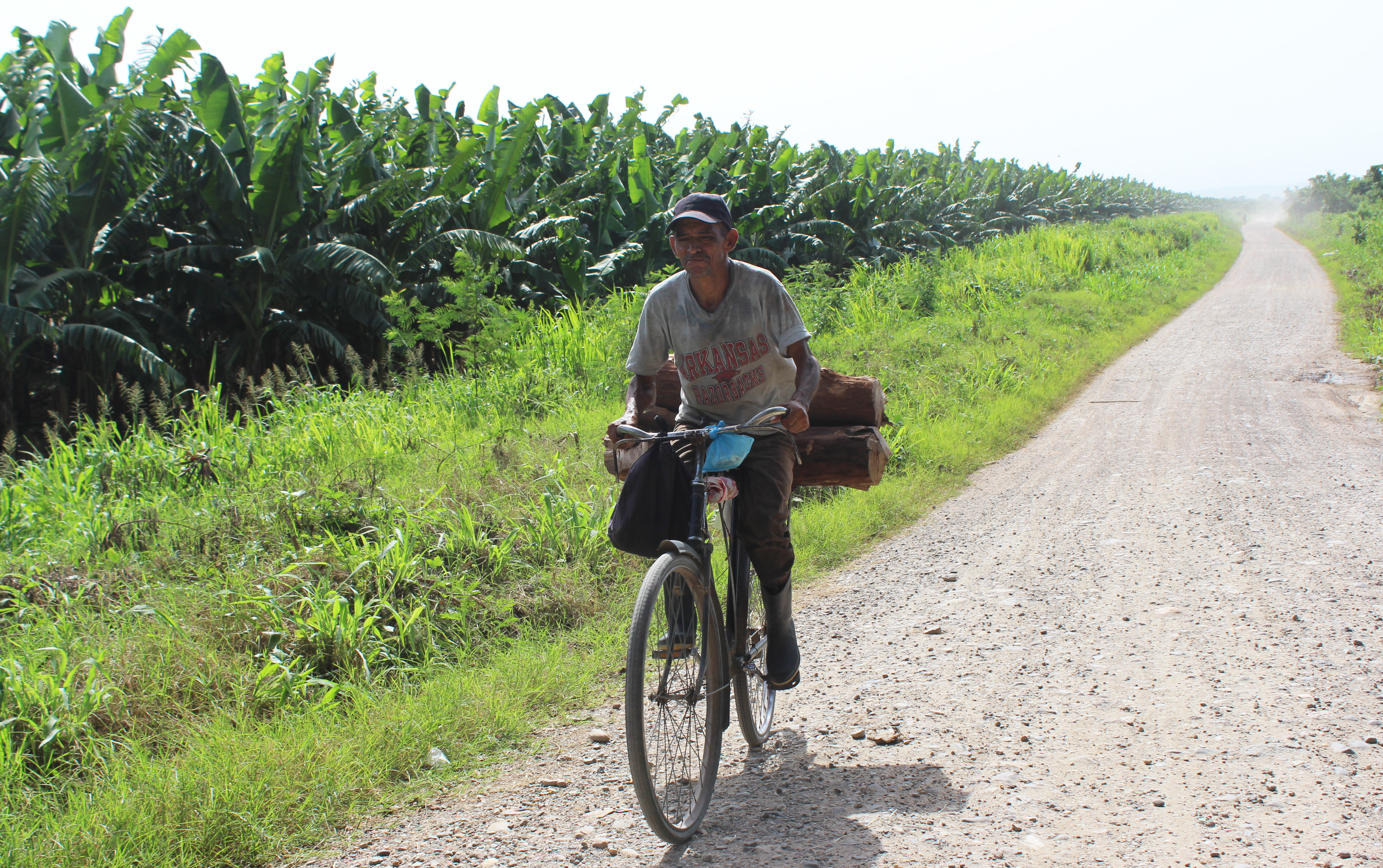 A man cycles past one of the few remaining banana plantations on Honduras's northern coast. (María José Burgos/CBC)