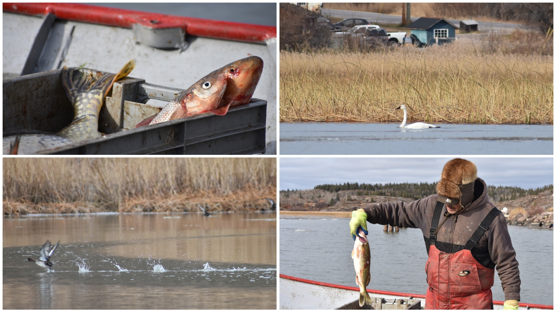 Residents say they've noticed a drop in water levels and a reduction in the number and species of fish and other wildlife. (Geneviève Normand/CBC Radio-Canada)