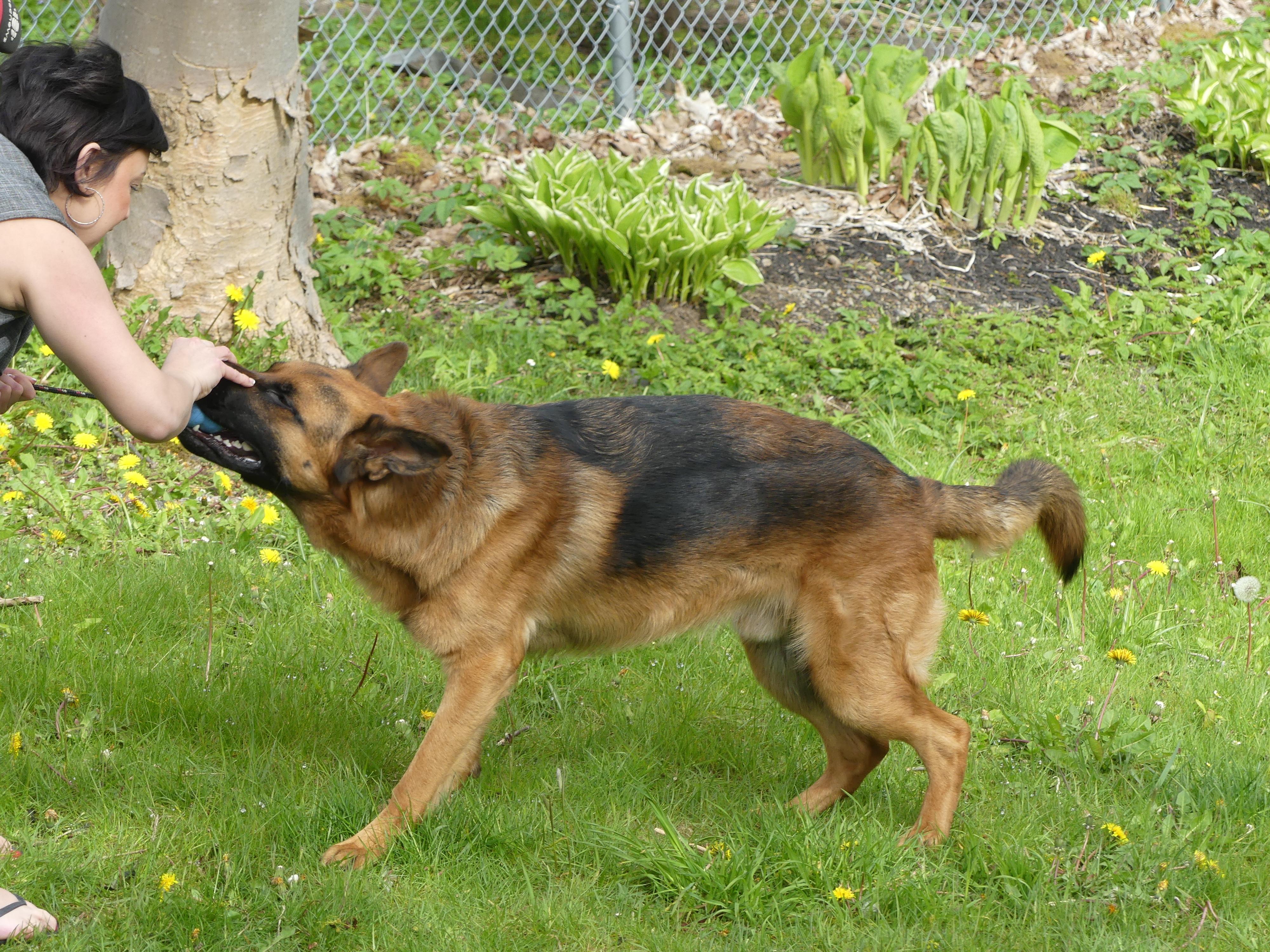Gabe is Esther Vardy's beloved service dog. (Ariana Kelland/CBC)