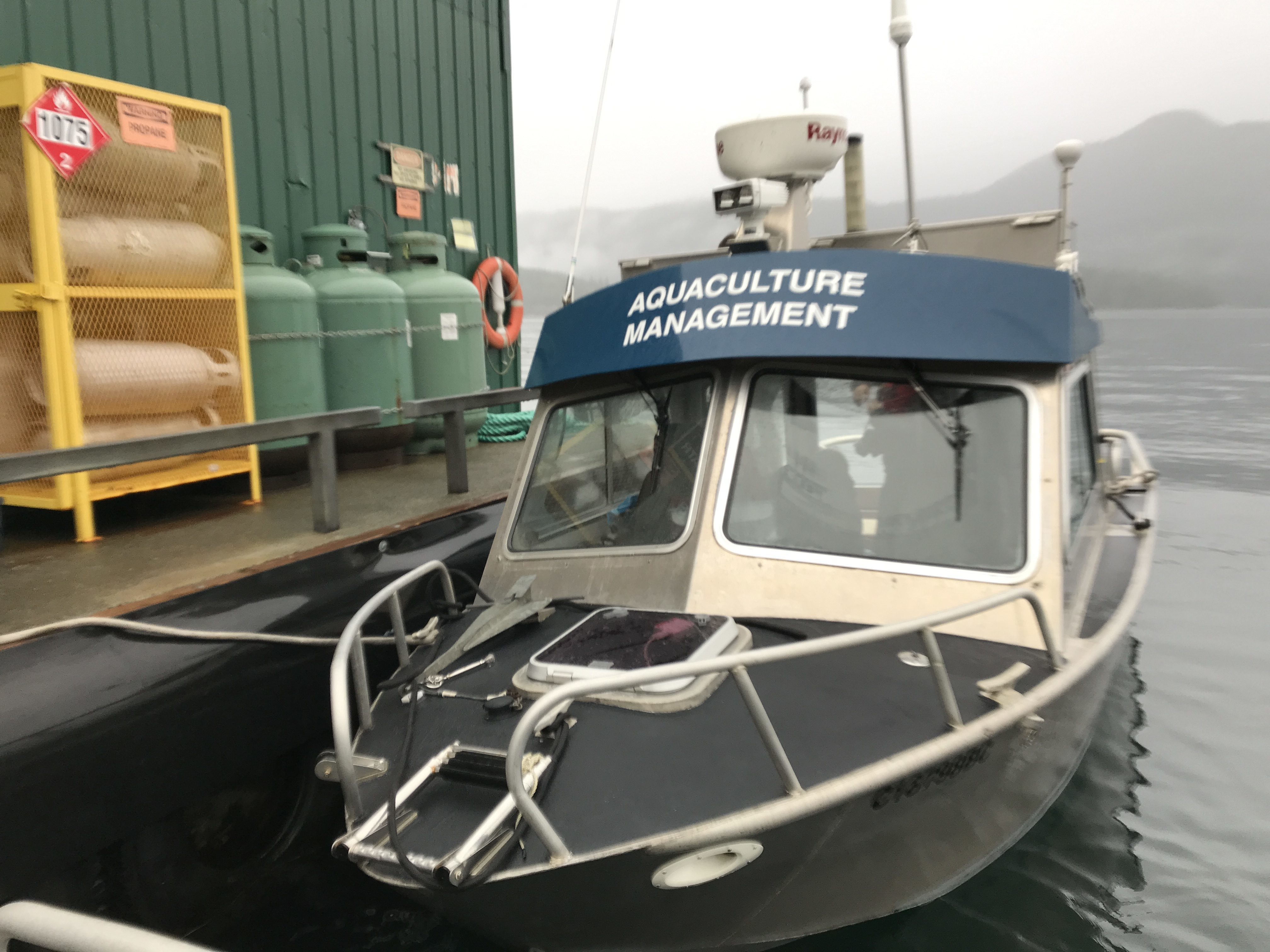 DFO officials conduct fish health audits at dozens of B.C. fish farms each year. (Megan Thomas/CBC)