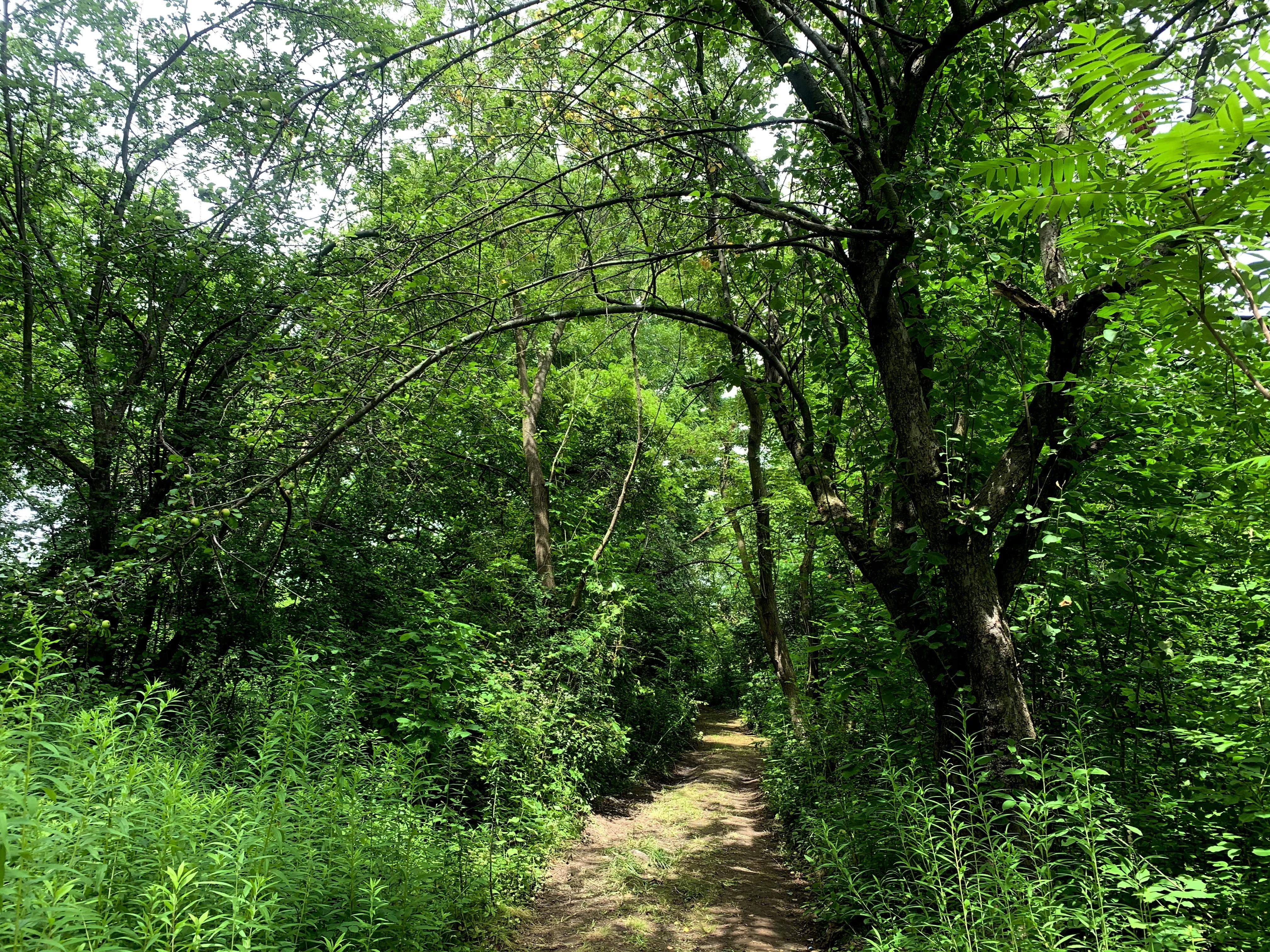 The Rotisken'rakéhte cleared brush to form a trail throughout the encampment. (Ka'nhehsí:io Deer/CBC)