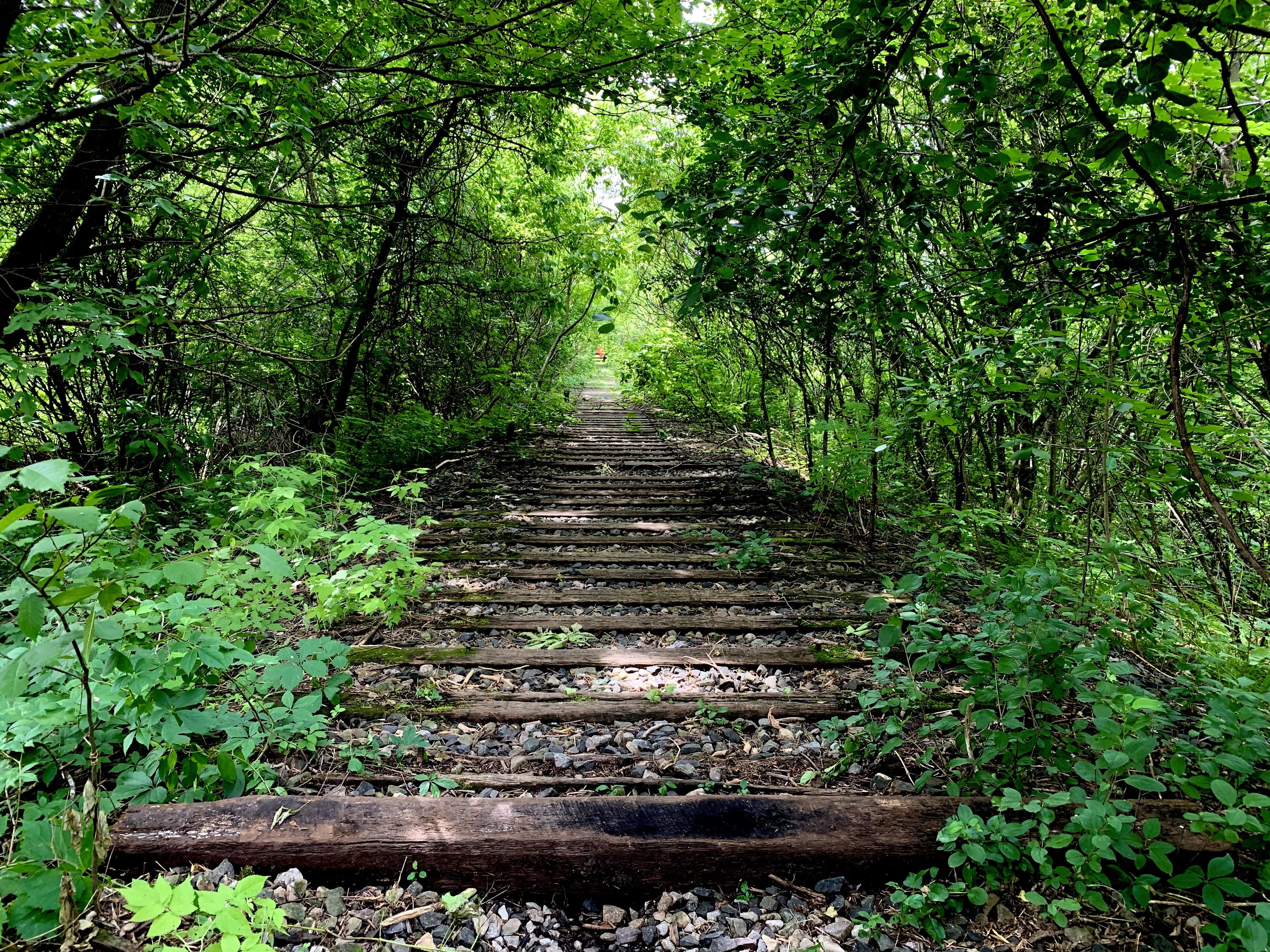 An old railway runs through the land where the encampment is located. (Ka'nhehsí:io Deer/CBC)