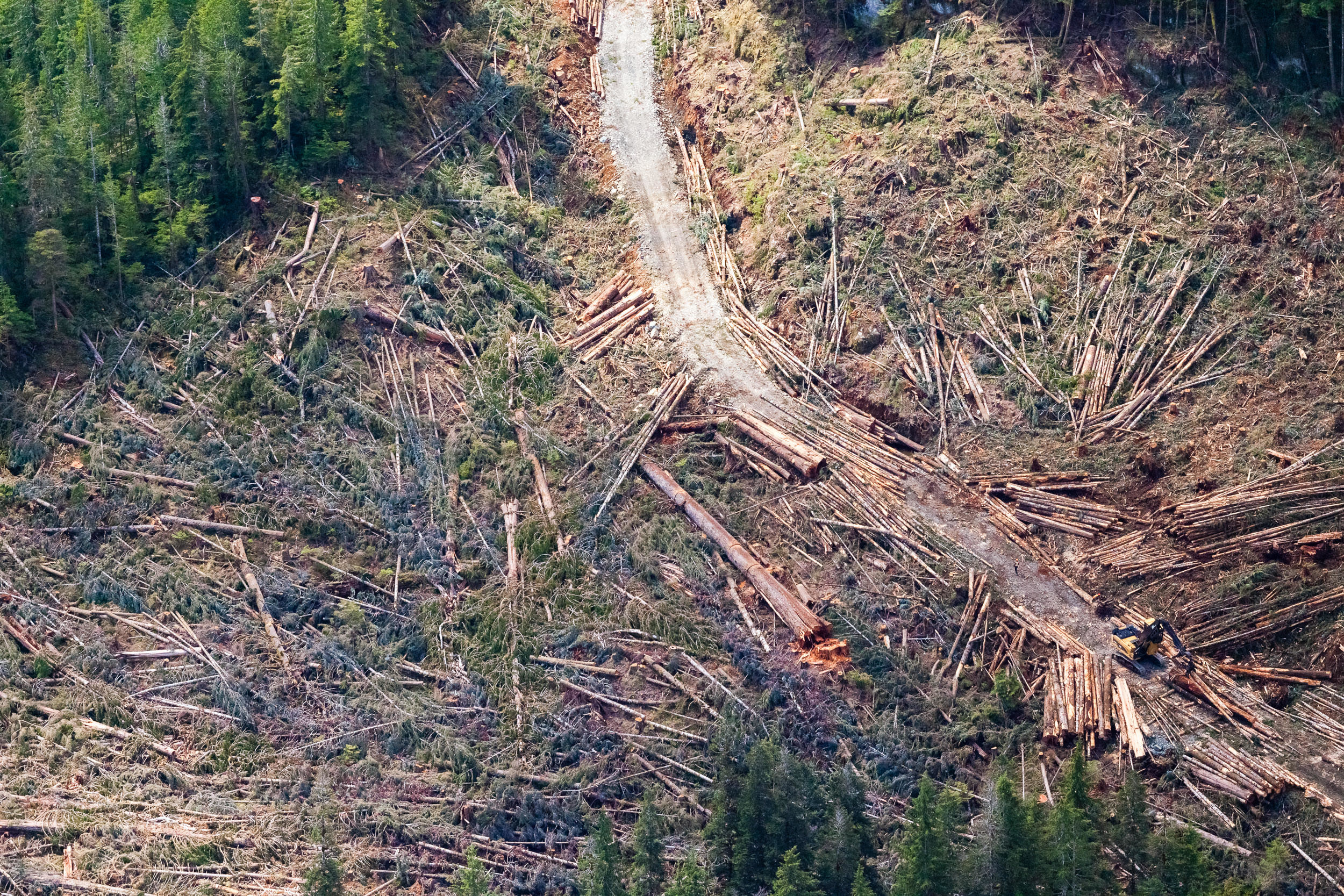 This aerial photograph shows a logging area in the Nahmint Valley. The giant Douglas fir can be seen bottom right. (TJ Watt)