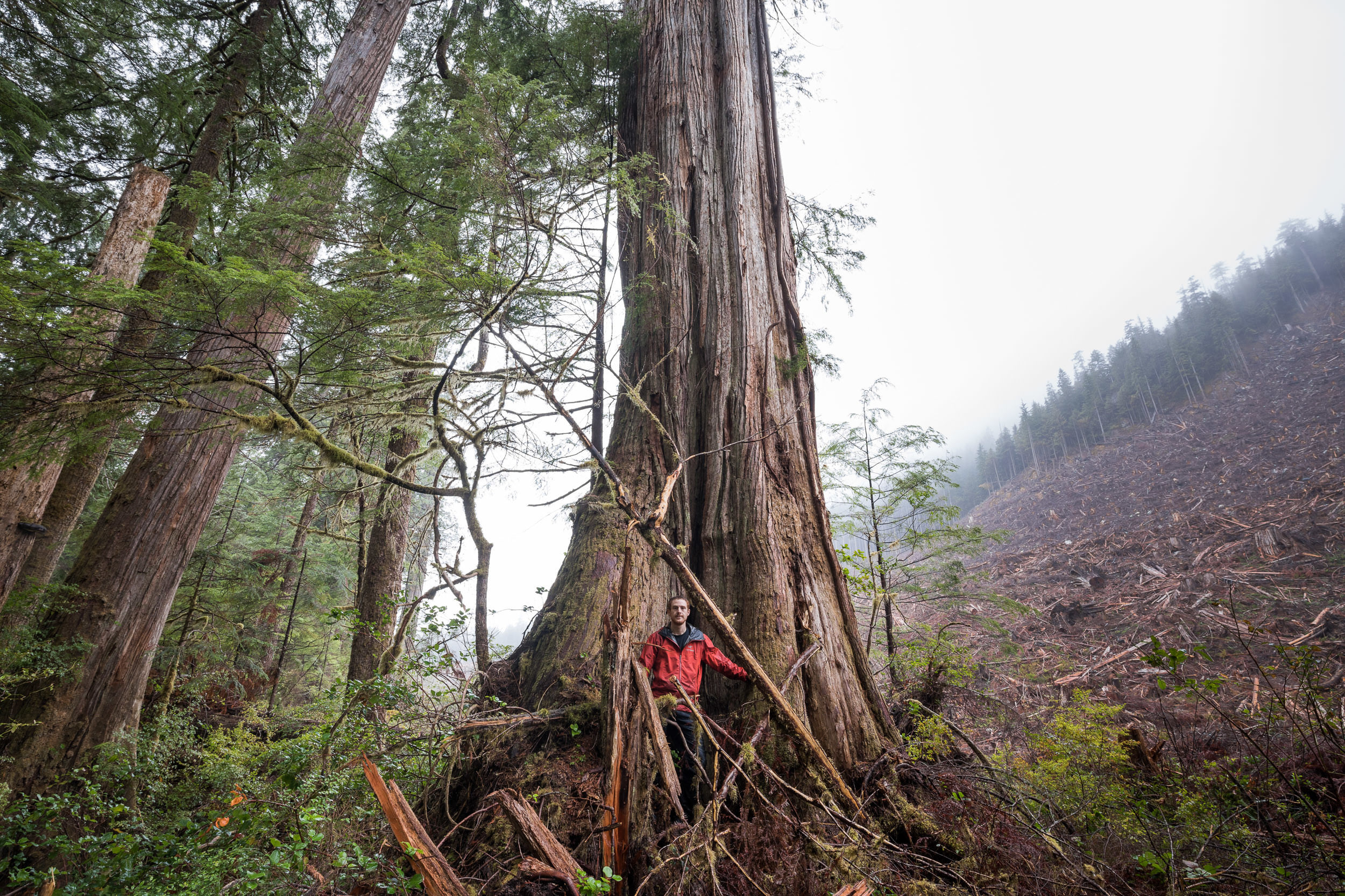 TJ Watt hopes his photography will motivate people to ask for further protections for old-growth forests in B.C. (TJ Watt)