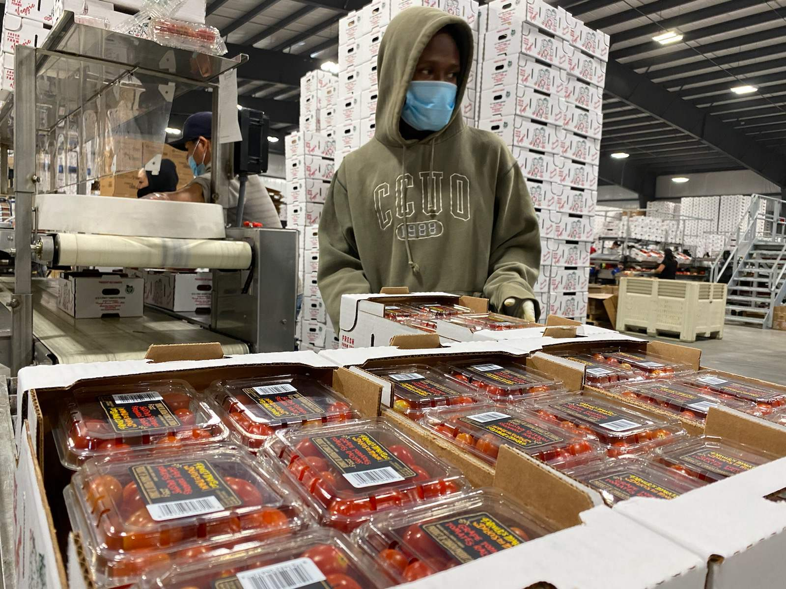 Procyk Farms Ltd. employs 550 migrant workers, mostly from Mexico, and ships 34 million kilograms of tomatoes and other produce across North America each year. (Virginia Smart/CBC)