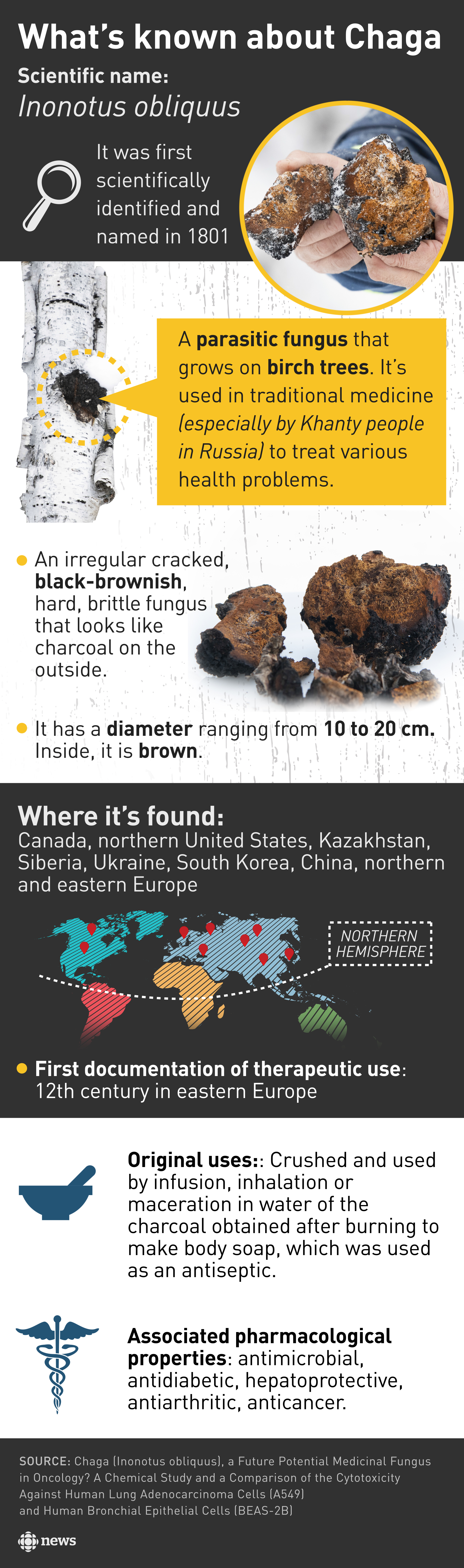 Chaga is a parasitic fungus that grows on birch trees. It has a diameter ranging from 10 to 20 cm. Inside, it is brown. It's used in traditional medicine (especially by Khanty people in Russia) to treat various health problems. It's found in Canada, northern United States, Kazakhstan, Siberia, Ukraine, South Korea, China, and northern and eastern Europe. The pharmacological properties historically associated with chaga are antimicrobial, antidiabetic, hepatoprotective, antiarthritic, anticancer. (CBC Graphics)