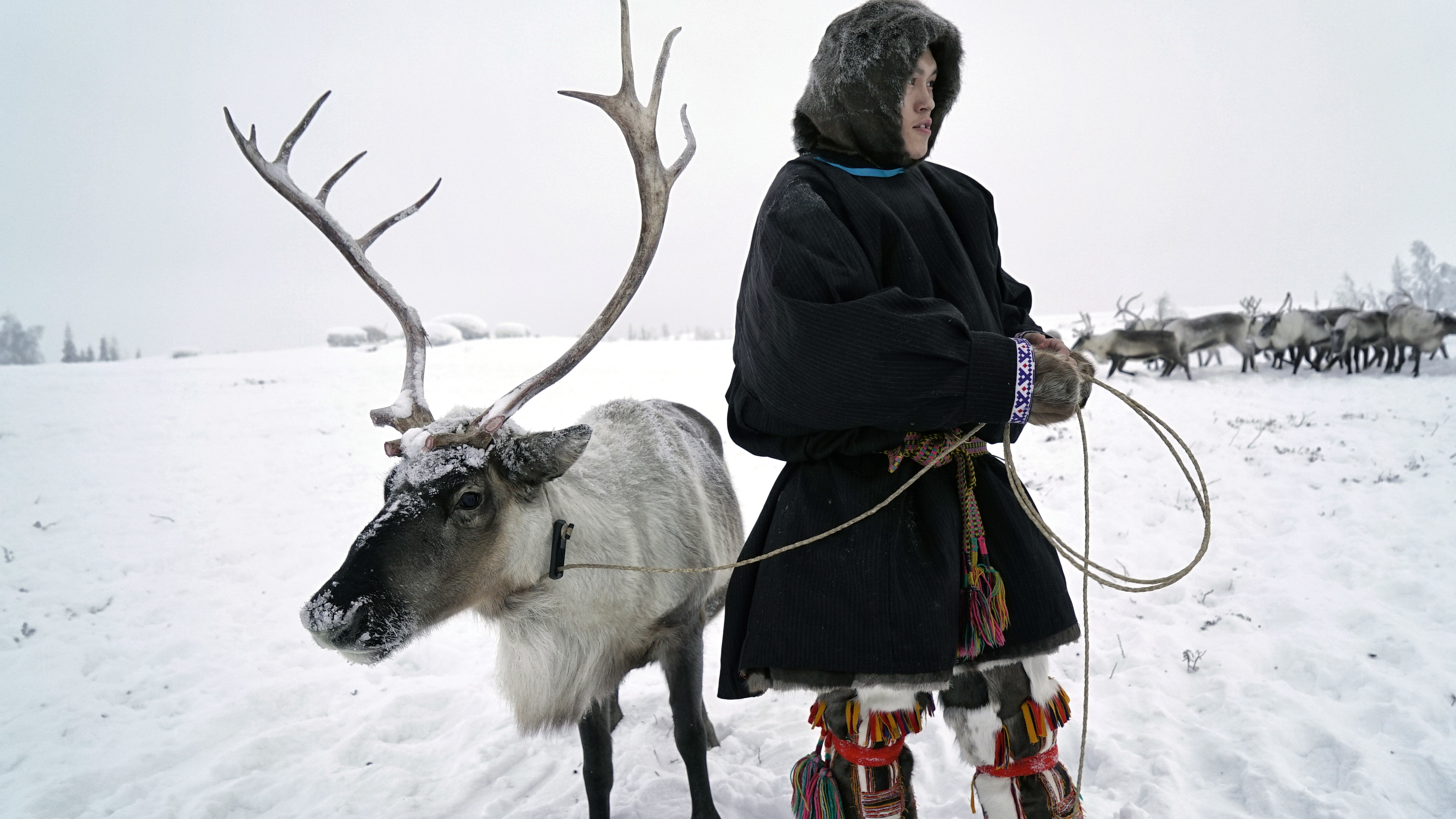 Maxime Okotetto, 19, has been herding reindeer since he was a boy. He says the rapid oil and gas development of recent years is destroying the animals' grazing land.