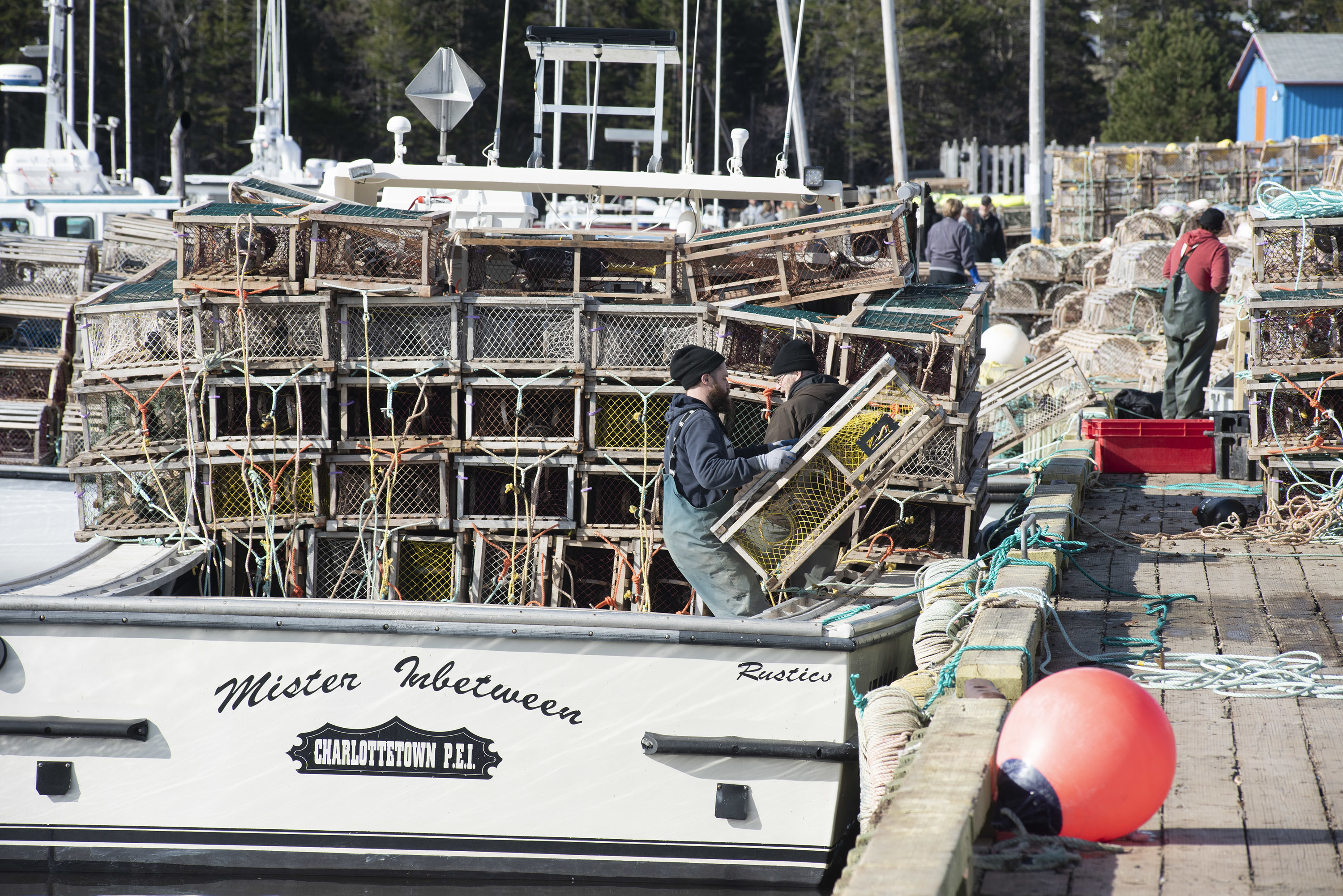 The wharf may look like it is in chaos, but looks are deceiving. The fishermen have been doing this for many years and there are rarely mistakes made. (Brian McInnis)