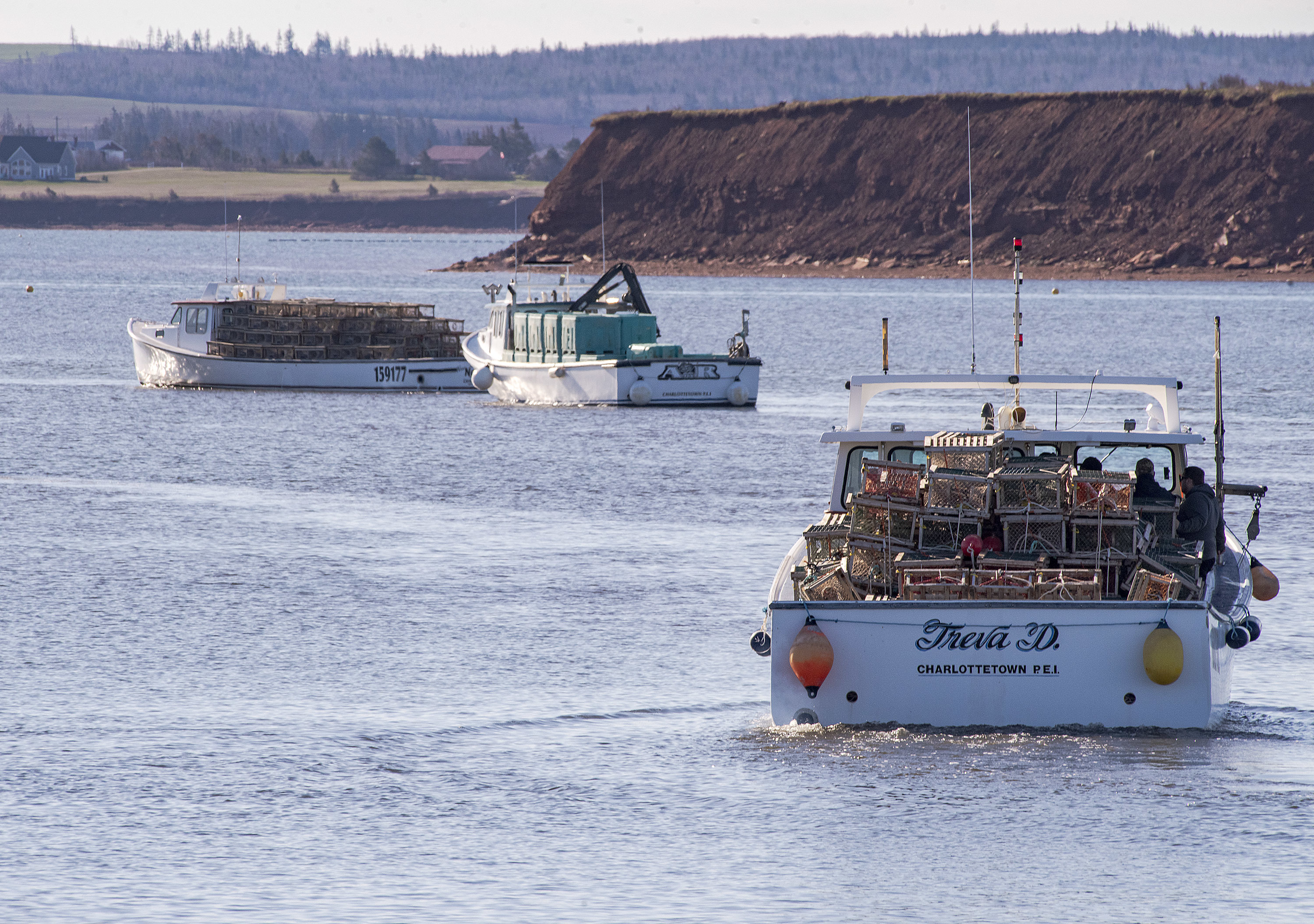 A mussel harvesting boat is sandwiched between lobster boats as they all head out of Malpeque Harbour Tuesday during the opening day of the P.E.I. lobster season. The day is traditionally called setting day. (Brian McInnis/CBC)