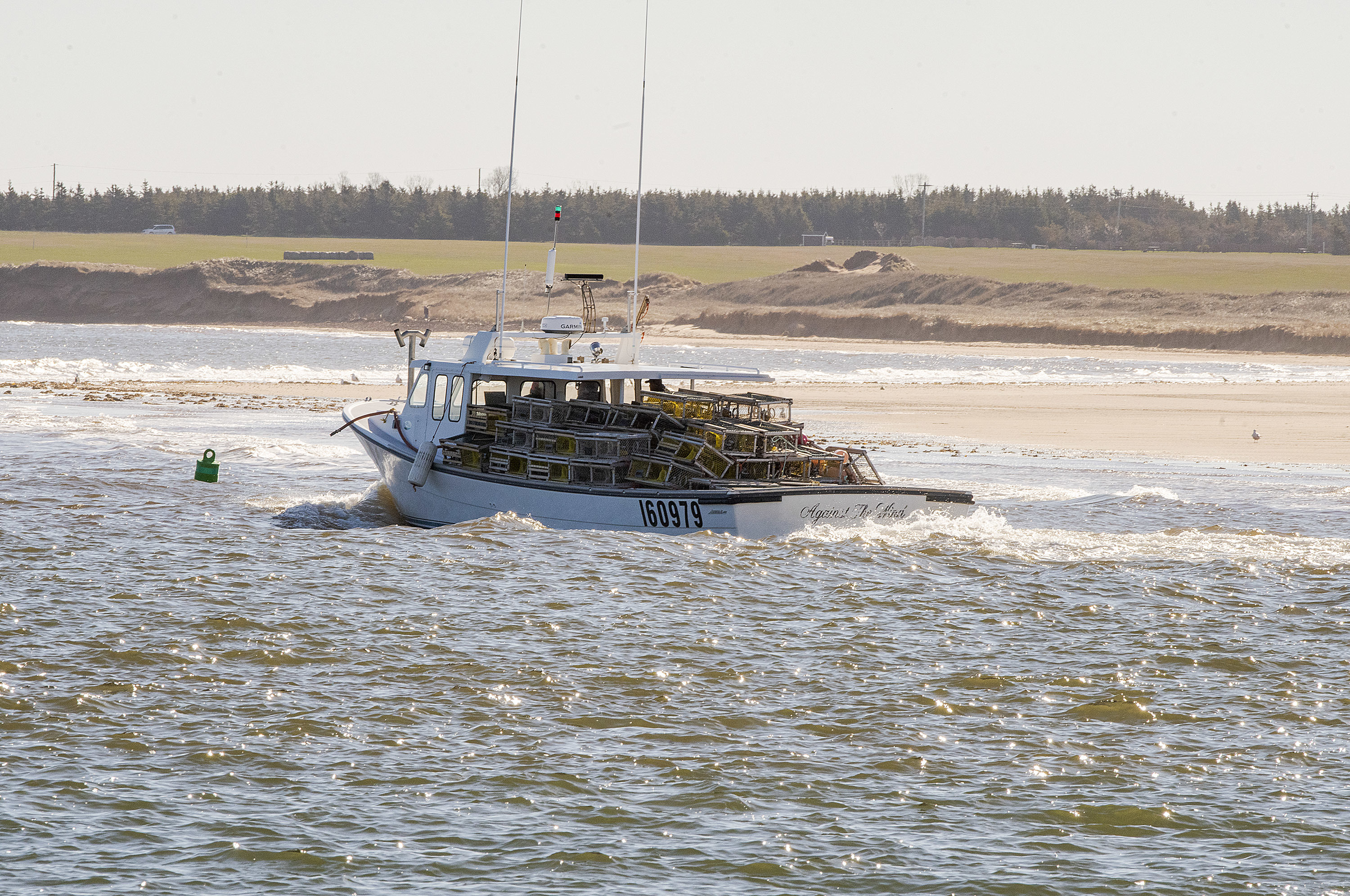 The captain of the Against the Wind takes his boat through the Malpeque Harbour channel Tuesday during the opening of the P.E.I. lobster season. (Brian McInnis/CBC)