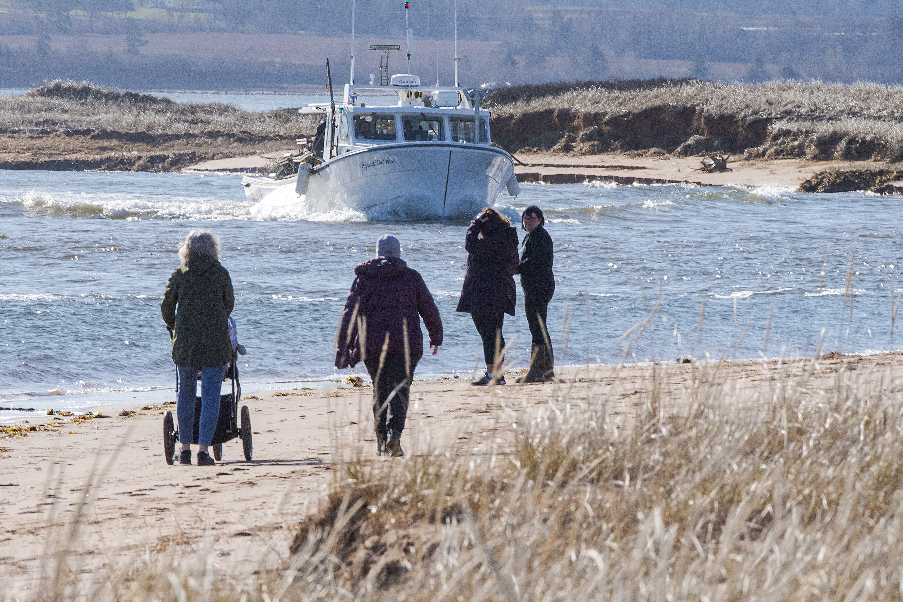 People walk along the shore at Malpeque Harbour to watch the annual parade of boats as they head out to the Gulf of St. Lawrence Tuesday. (Brian McInnis/CBC)