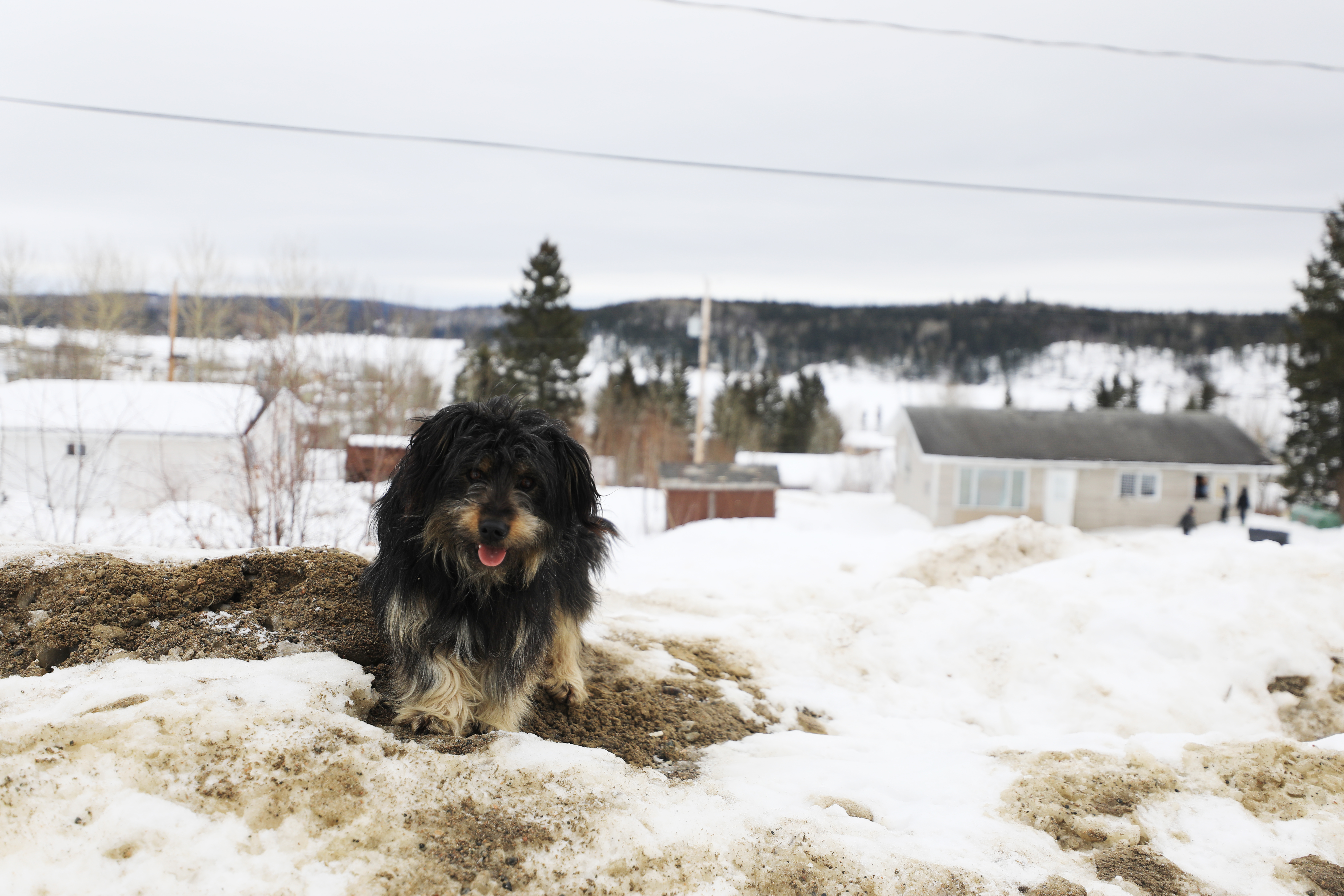 A fluffy dog wanders around one of the higher points in Stanley Mission with the Churchhill River behind it. (Heidi Atter/CBC)