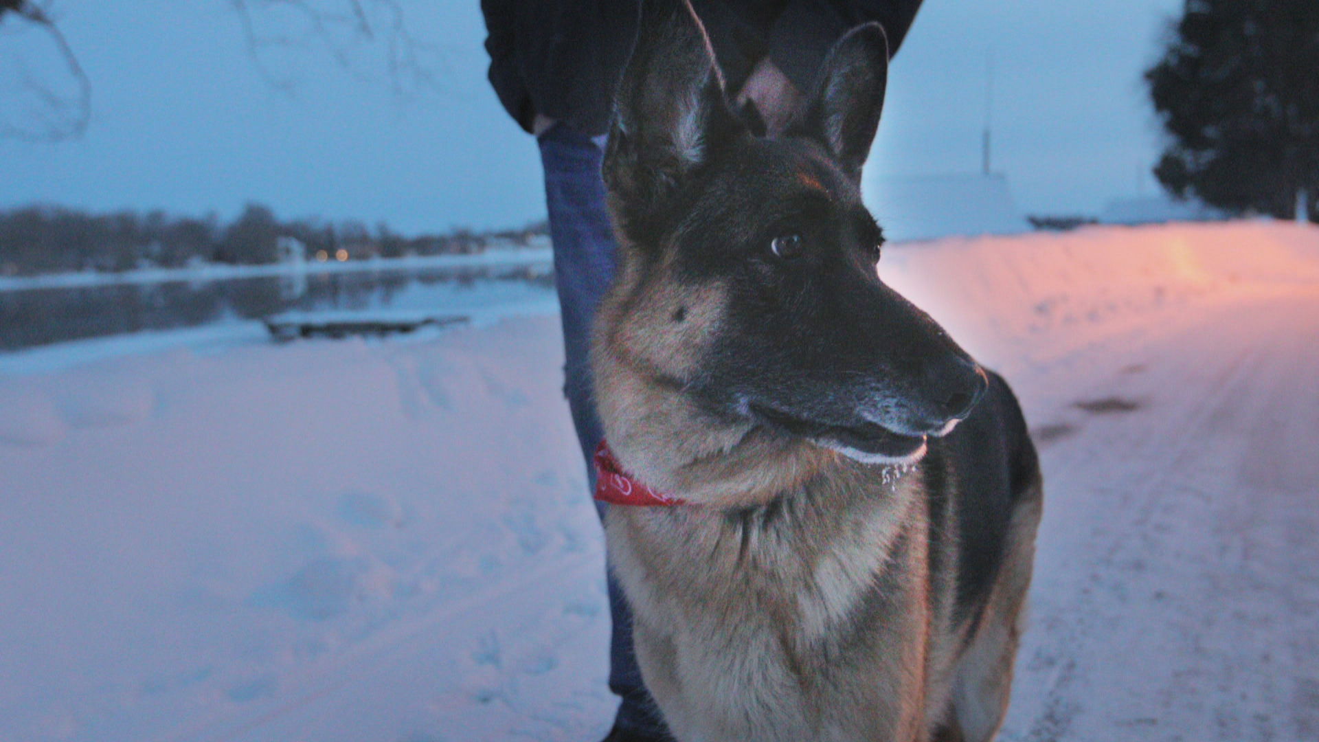 Moore says his dog, Tyson, saved his life when he was contemplating taking his own life. (John Badcock/CBC)