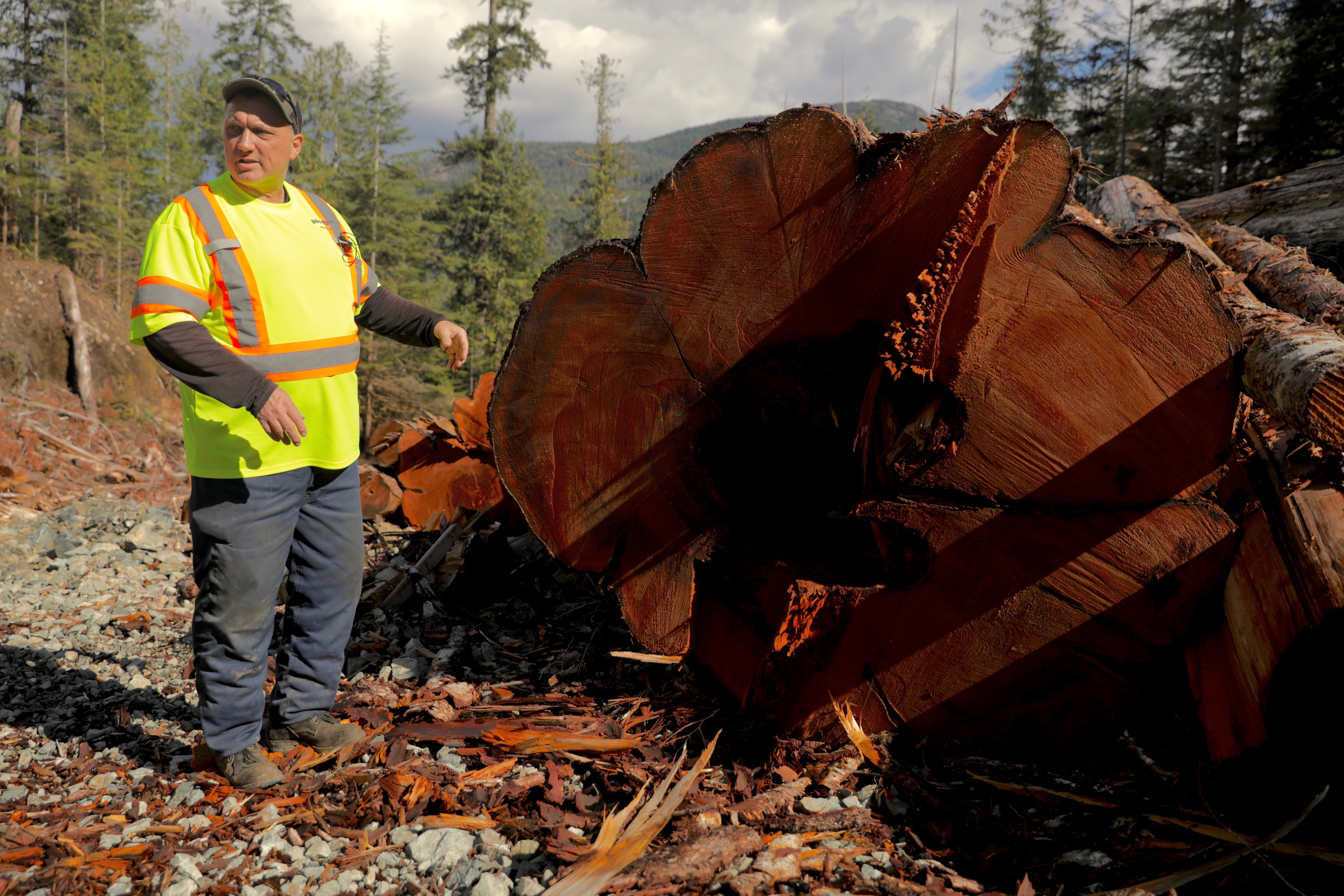 Forestry manager Zoltan Schafer shows an old-growth cedar in the Nahmint Valley. (Chris Corday/CBC)