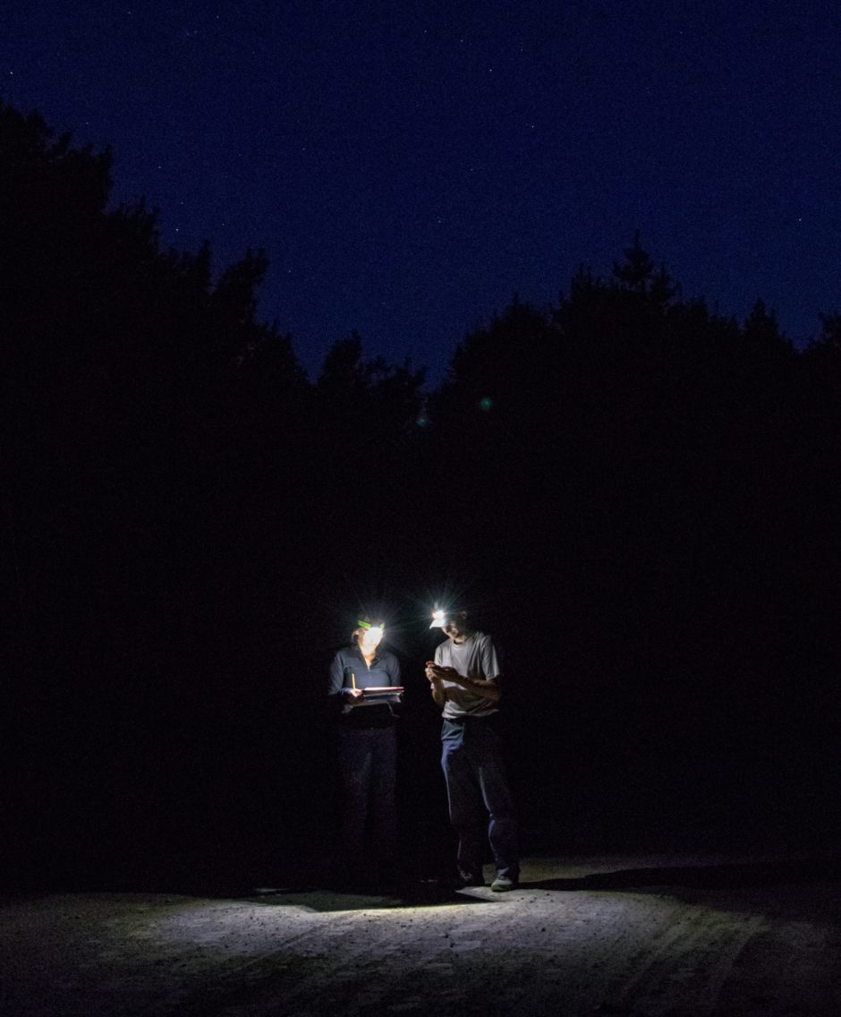 Two biologists with headlamps compare notes in the dark.