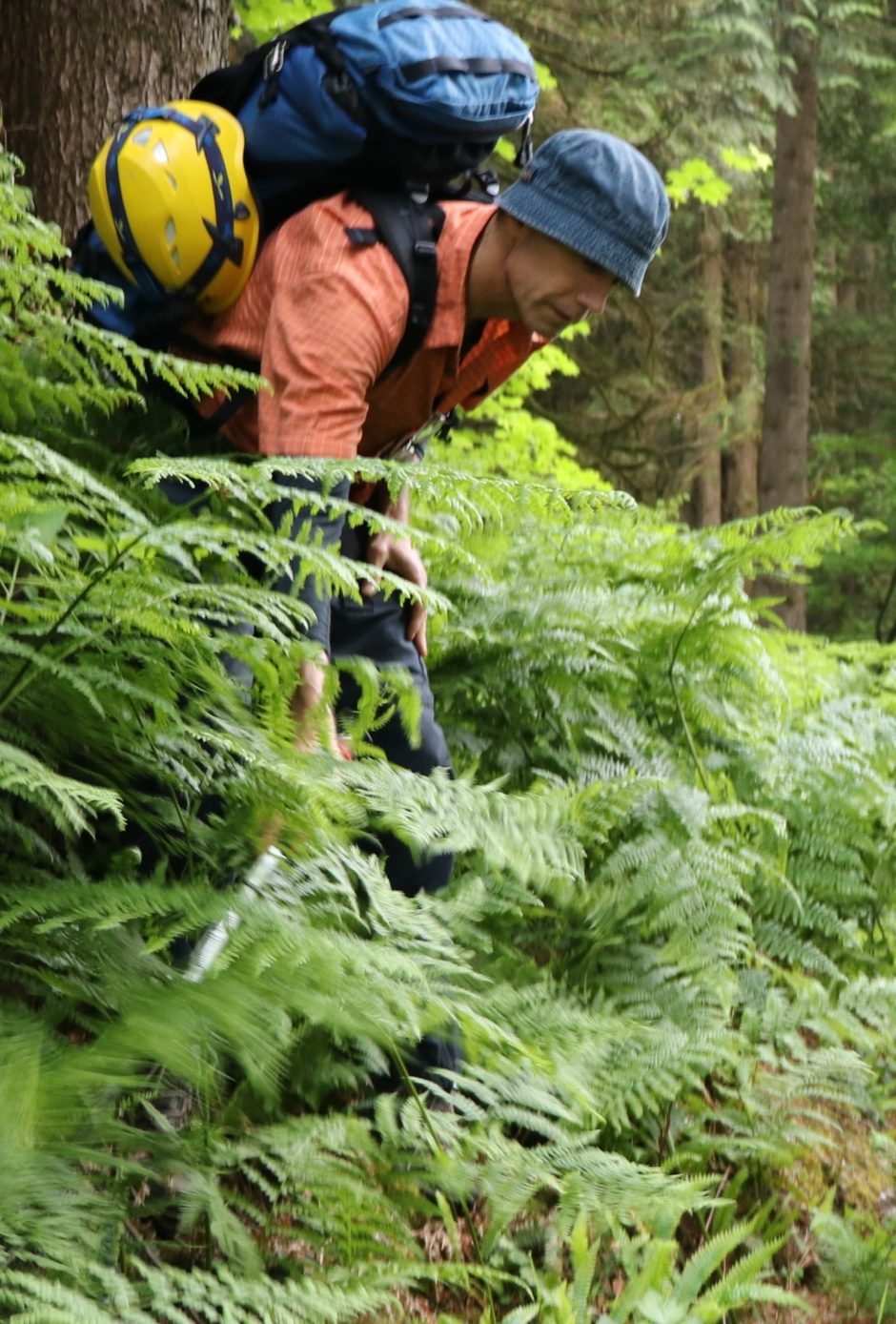 Search and rescue volunteers trudge through the bush during a training session on the North Shore.