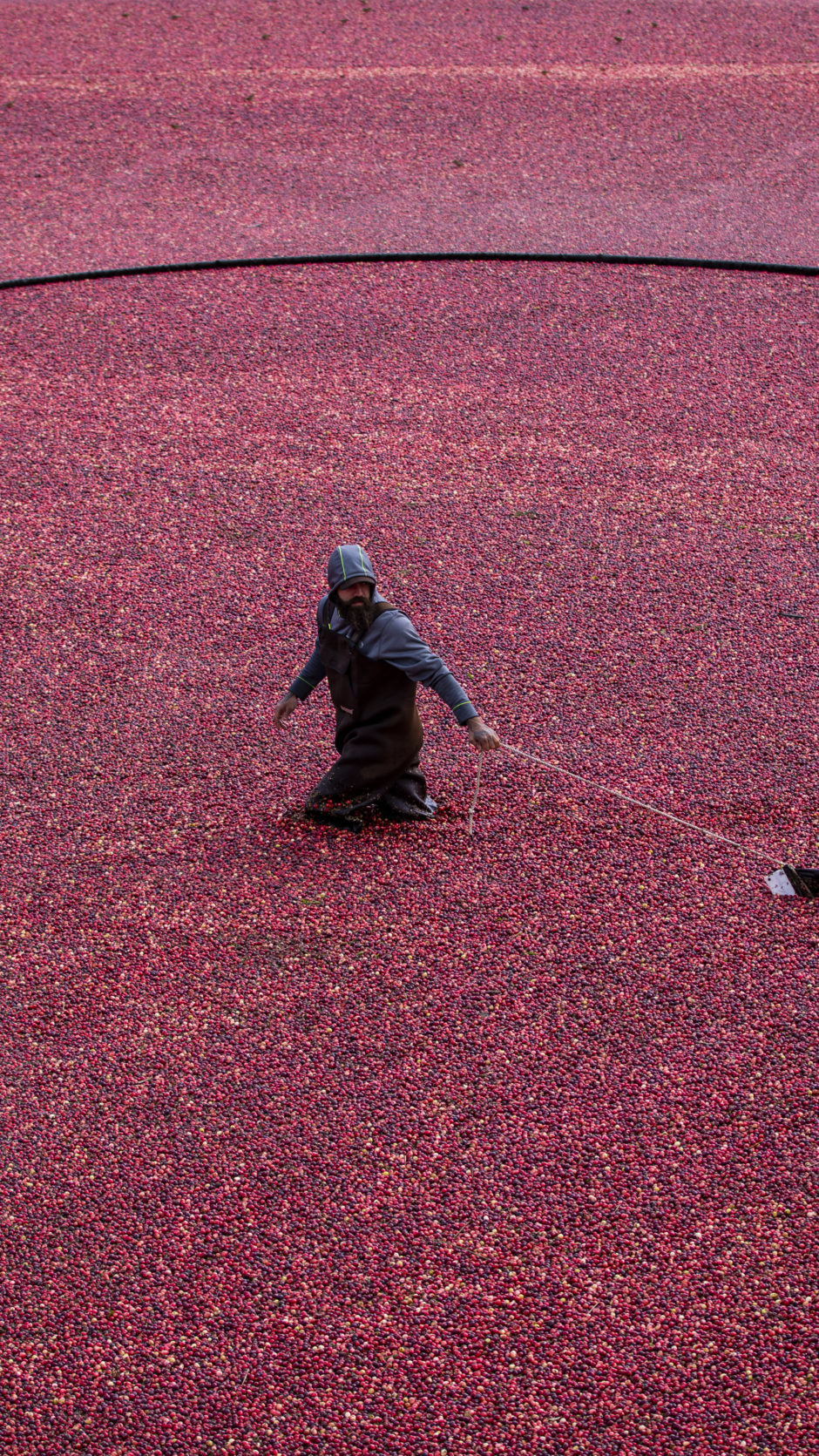 For the love of cranberries
