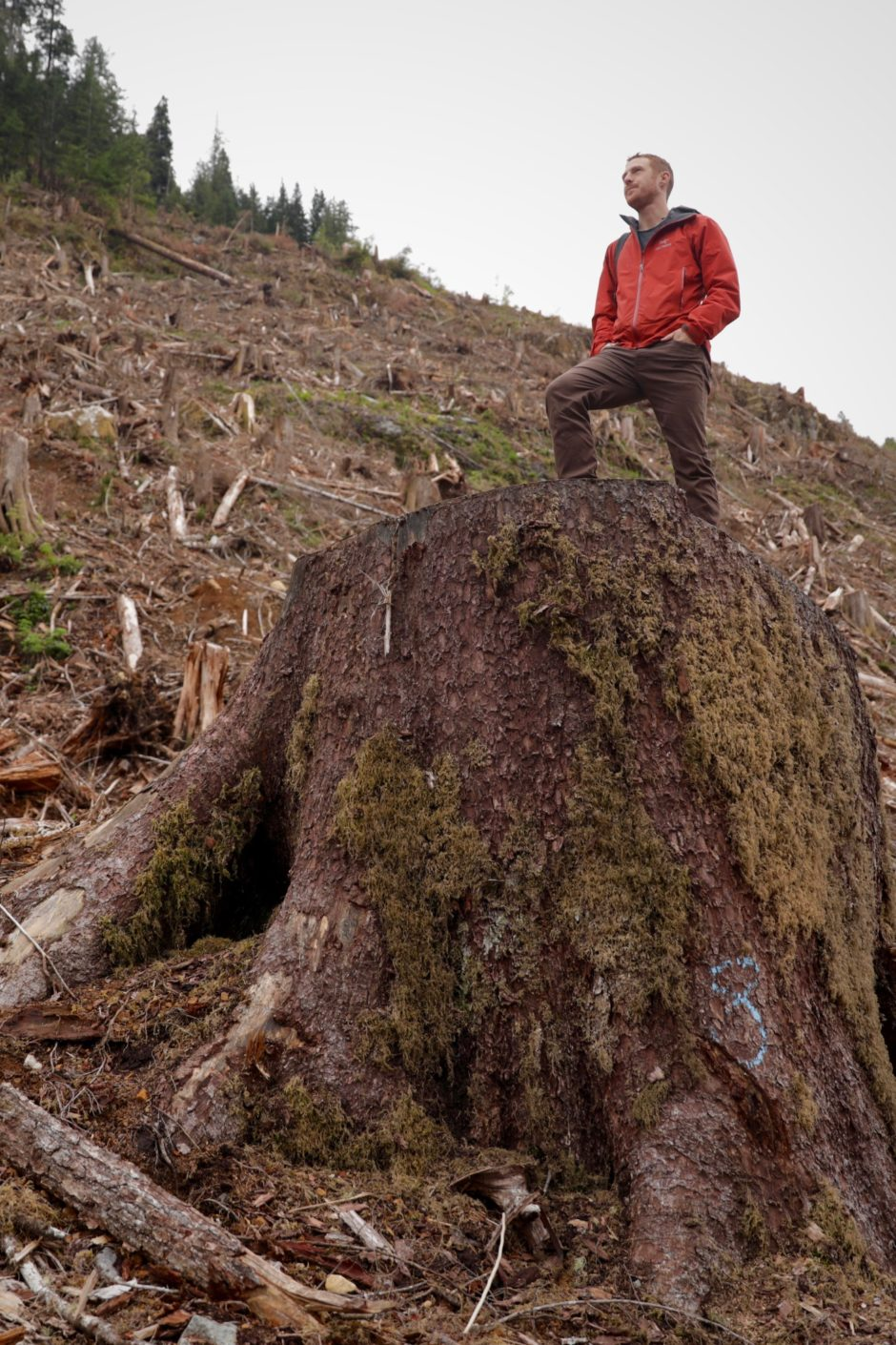 Ancient Forest Alliance campaigner TJ Watt stands on the stump of a spruce tree in a logged area near Hadikin Lake, outside Lake Cowhican on Vancouver Island. (Chris Corday/CBC)