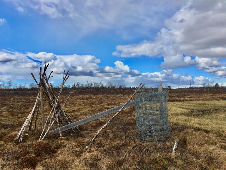 A reindeer corral area where Saami herders gather their reindeer in winter in Kiruna, Sweden. (Eilís Quinn/Eye on the Arctic)