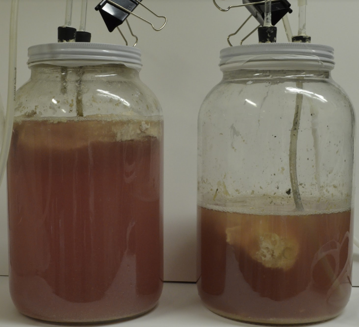 The DeathLab in New York is experimenting with methods of accelerated decomposition and fermentation to extract chemical elements from corpses that can be reused. Here, anaerobic fermentation is tested on a pork chop. (DeathLab)