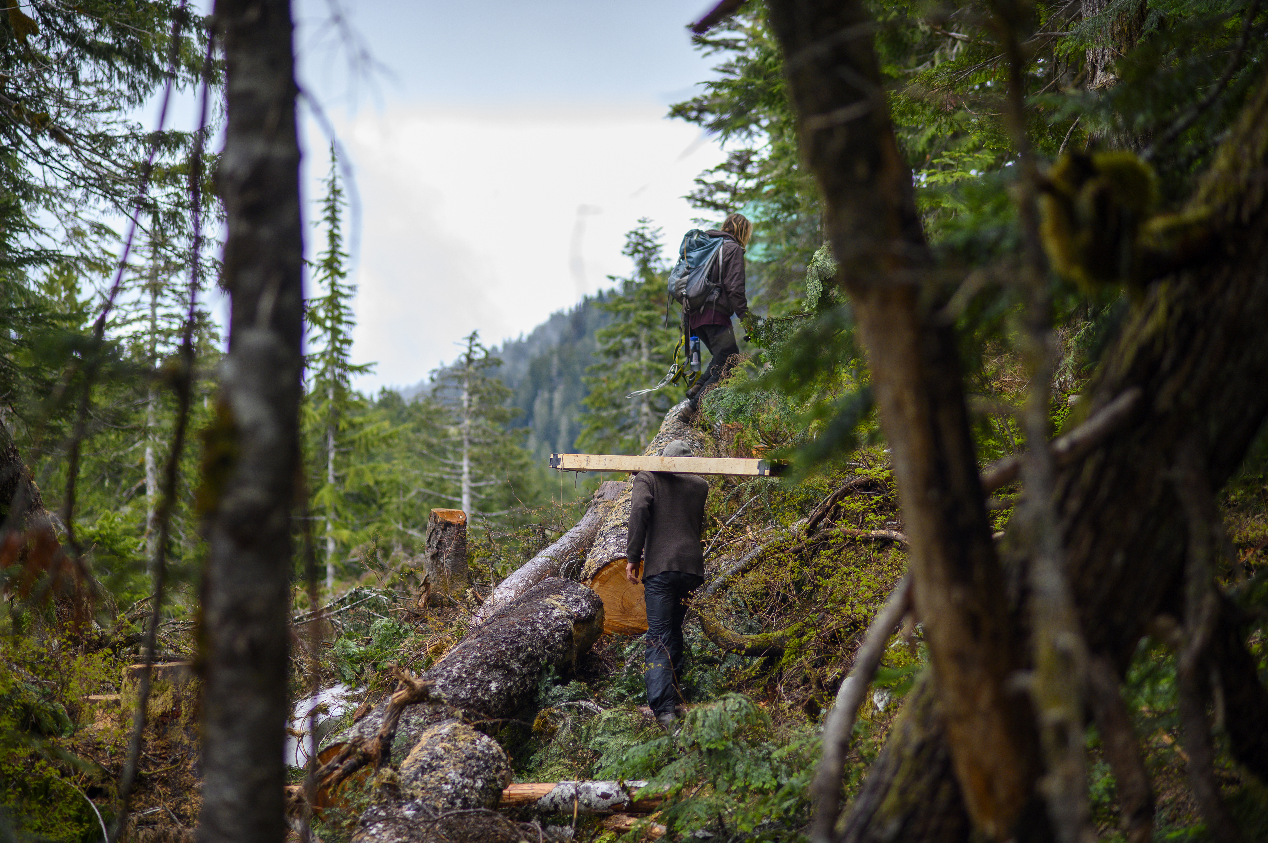 Ridge Camp occupants carry supplies to build a new tree-sit, a platform that enables protestors to position themselves in a tree to prevent it from being cut down. (Kieran Oudshoorn/CBC)