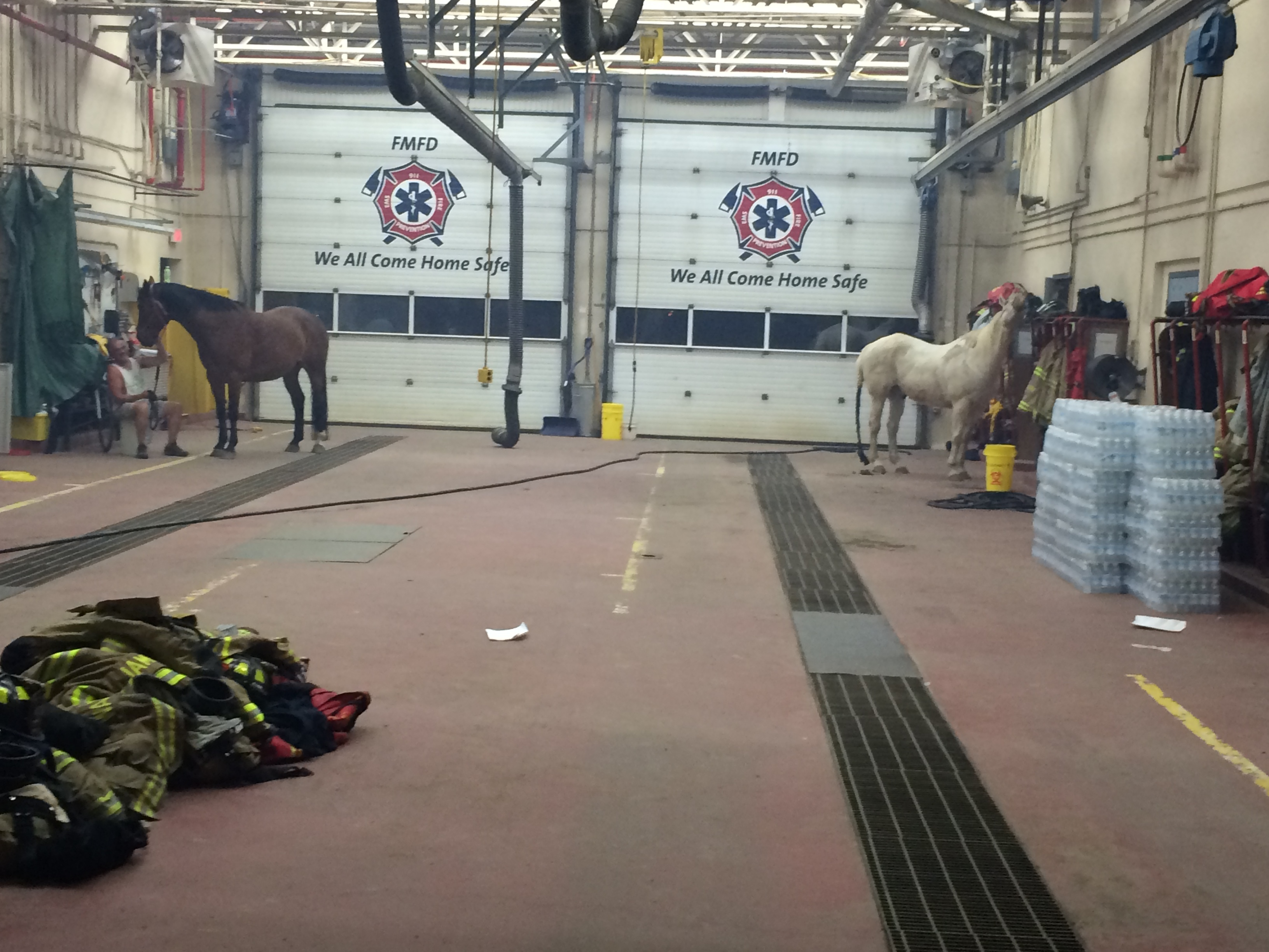 Darby Allen took this photo of horses finding shelter in Fort McMurray's Fire Hall 1, overnight on May 3. (Darby Allen)