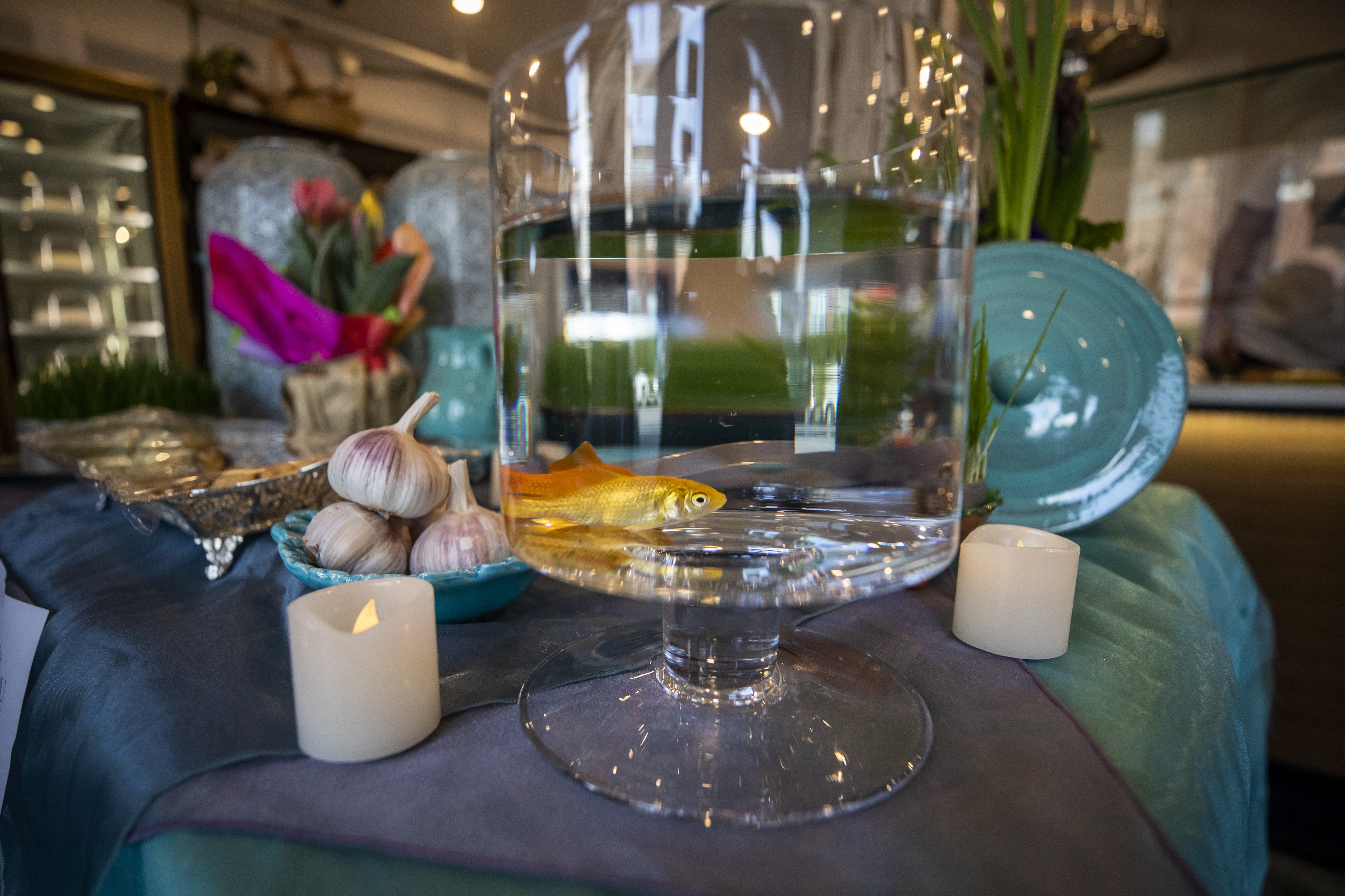 The tradition of including goldfish on the haft-sin table for good luck dates back to the 16th and 17th centuries. (Ben Nelms/CBC)