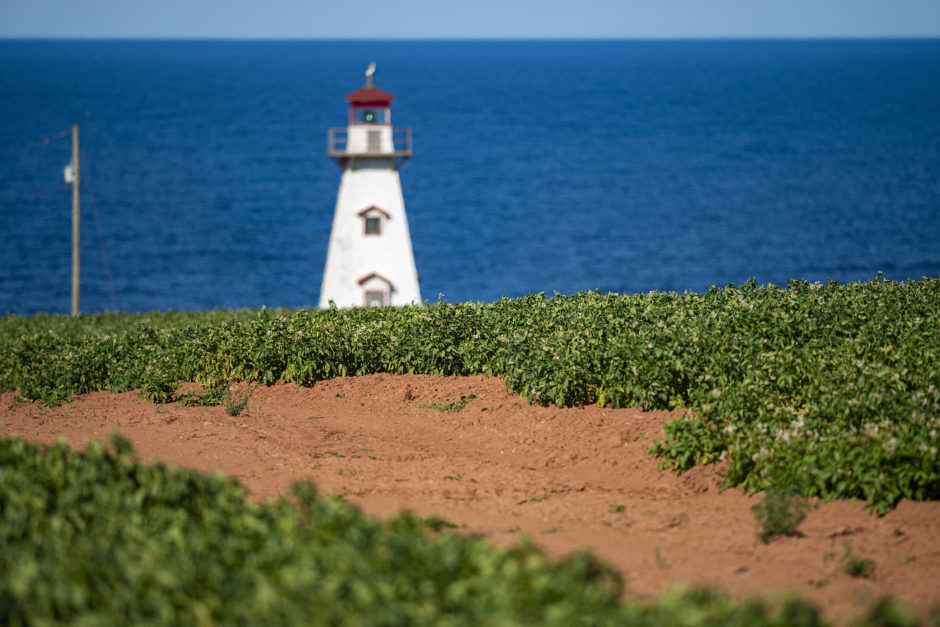 A quintessential Prince Edward Island scene with this potato field almost ready for harvesting and the Cape Tryon lighthouse looming on the nearby cliffs overlooking the Gulf of St. Lawrence. Brian McInnis/CBC