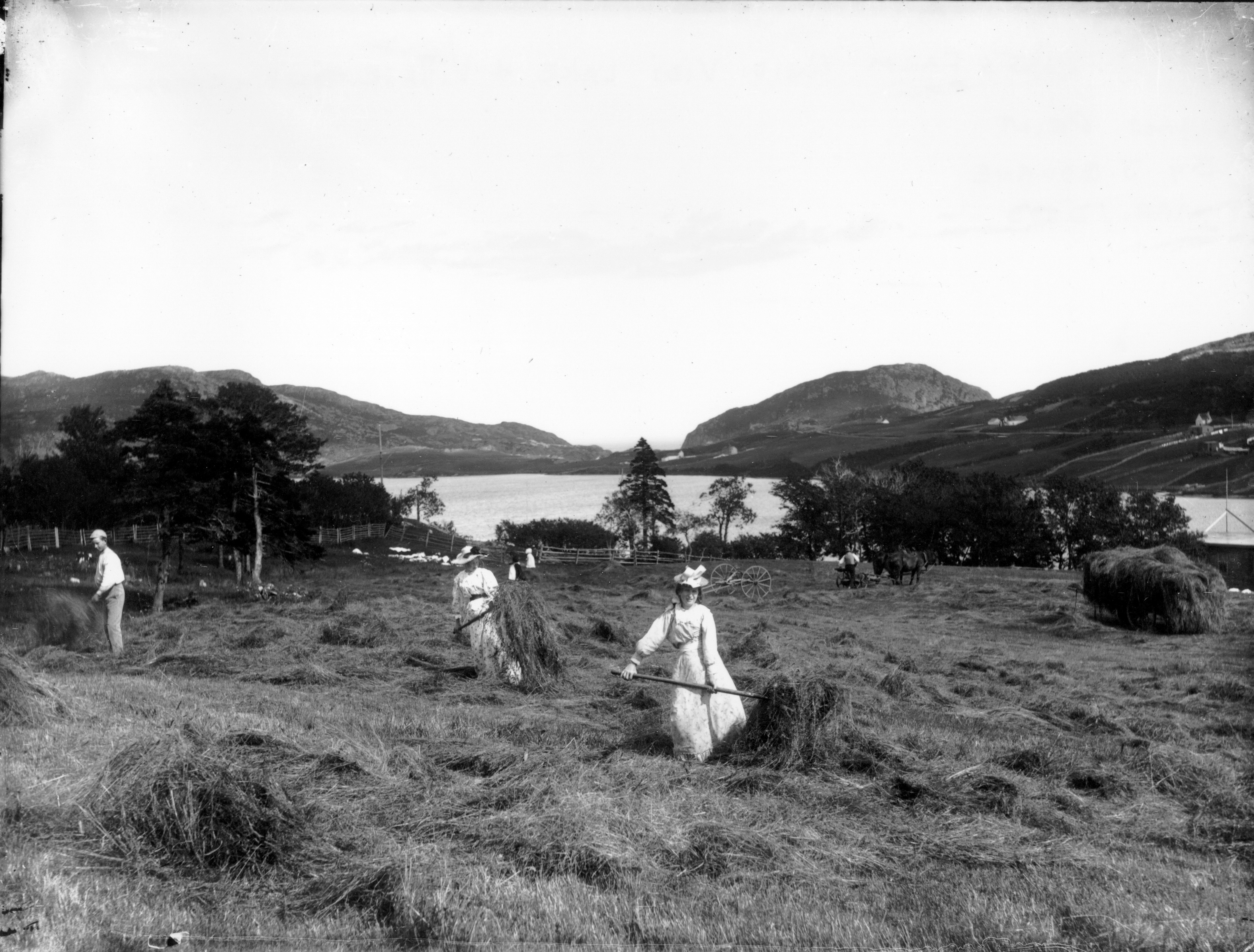 Women making hay on Ross's farm in 1911. (The Rooms)
