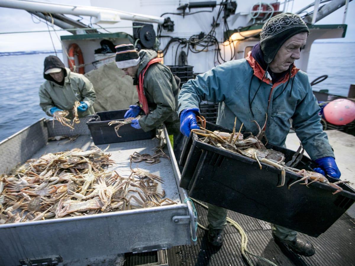 Snow crab fishermen sort their catch off the Gaspésie in Quebec. (Maxime Corneau/RCI)